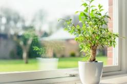 Экологичные стеклопакеты — дерево или пвх?