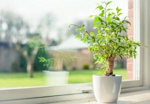 Экологичные стеклопакеты