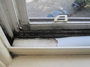 Пластиковое окно с плесенью
